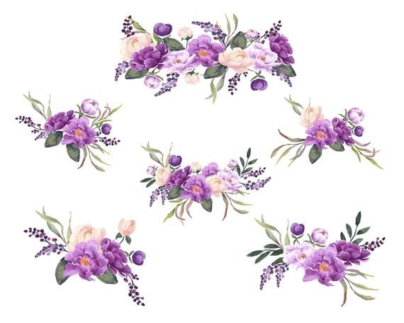 Purple Peonies Hand Painted Floral Clip Art, Purple and.