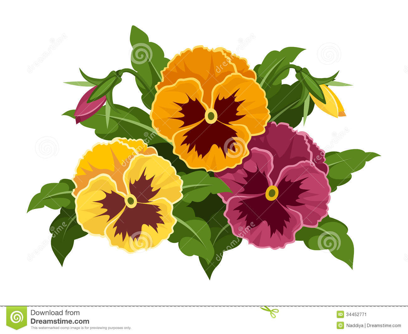 Pansy Flowers. Stock Image.