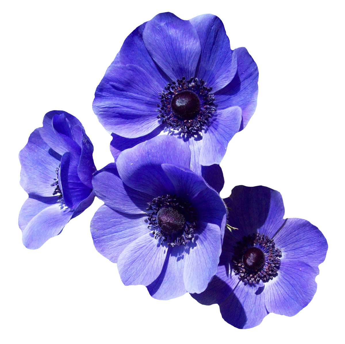 Purple Flower PNG Image.