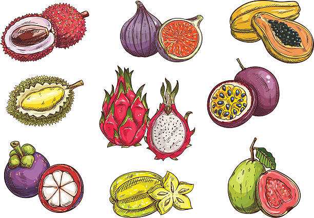 Purple Granadilla Clip Art, Vector Images & Illustrations.