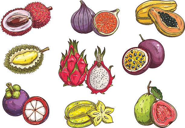 Purple Granadilla Clip Art, Vector Images & Illustrations.