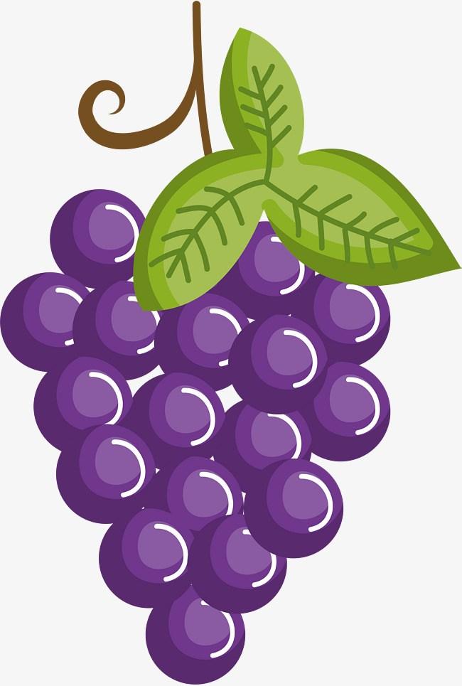 Purple grapes clipart 4 » Clipart Portal.
