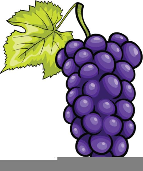 Purple Grapes Clipart.