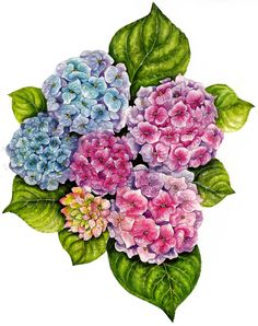 Free Purple Hydrangea Cliparts, Download Free Clip Art, Free.