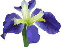 Purple Iris Clip Art.