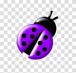 Ladybugs Colours, purple bug illustration transparent.