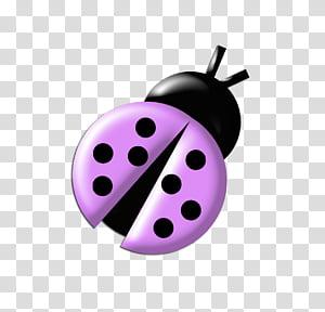 Ladybugs Colours, black and purple ladybug illustration.