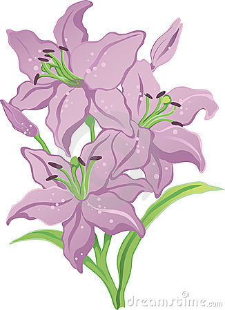 Three Purple Lilies Stock Photos, Images, & Pictures.