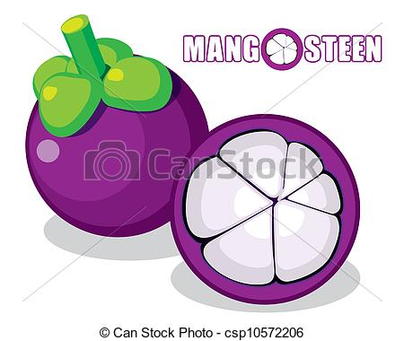 Mangosteen Illustrations and Clipart. 452 Mangosteen royalty free.
