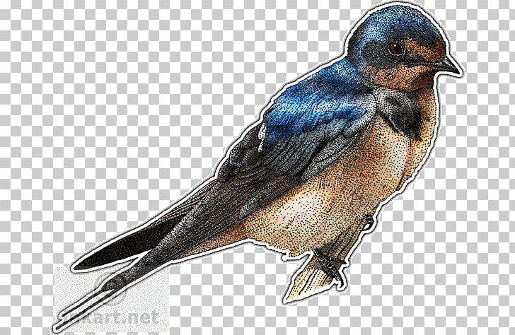 Barn Swallow Drawing PNG, Clipart, Animals, Art, Barn, Barn.