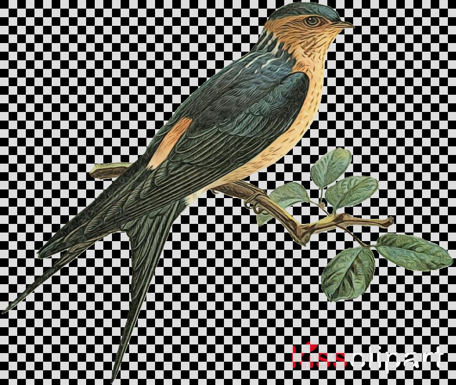 bird beak european swallow cuculiformes purple martin.