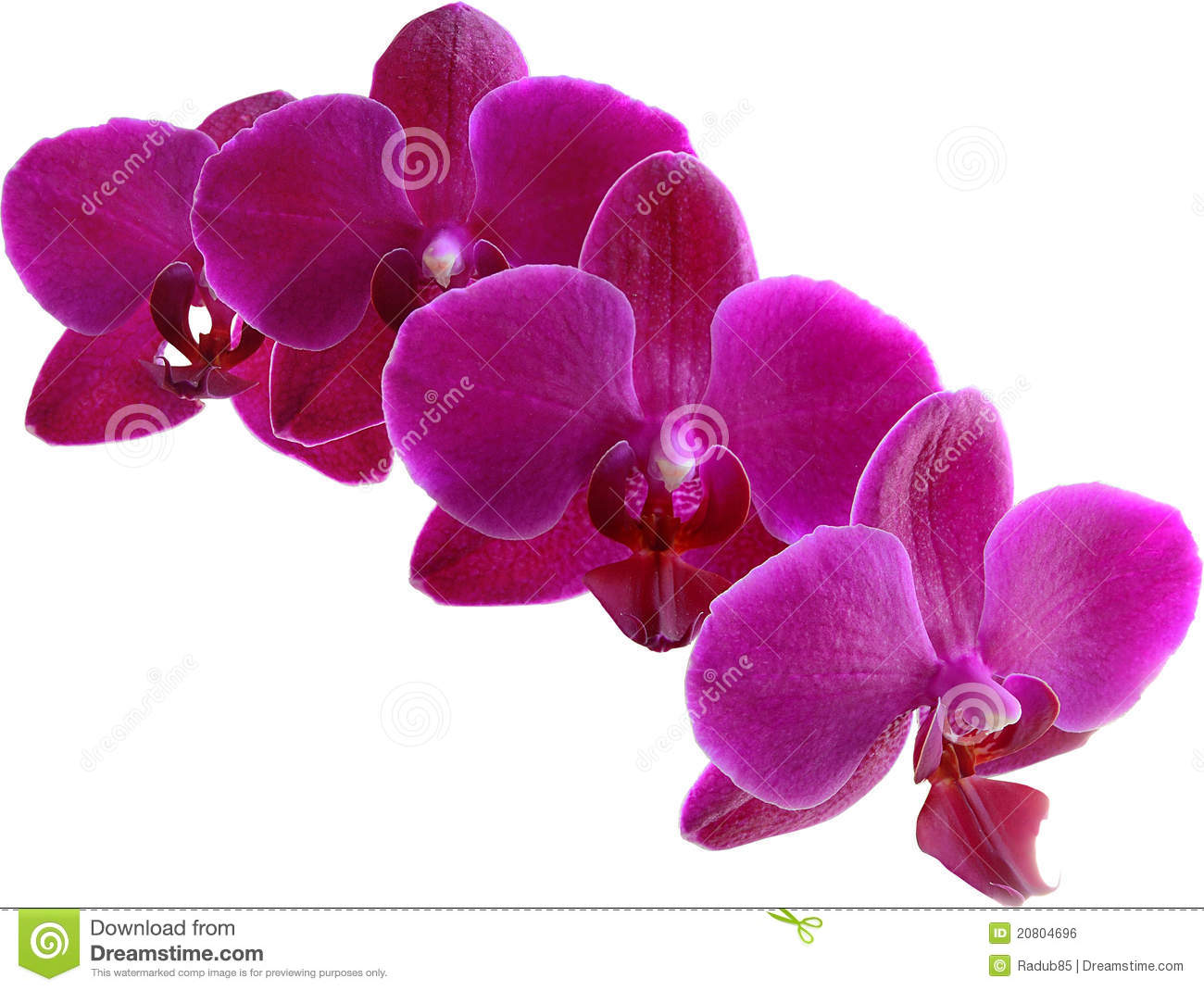 Purple orchid clipart - Clipground