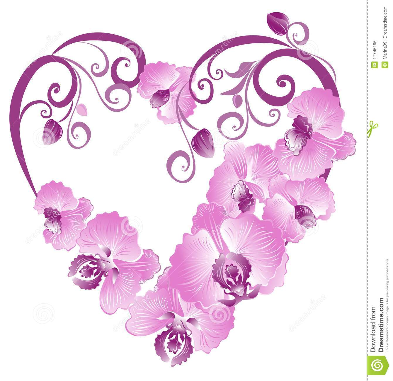 Purple Orchid Stock Illustrations.