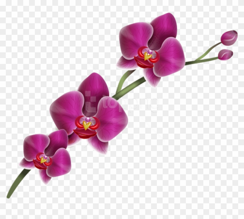 Free Png Download Purple Orchid Png Images Background.