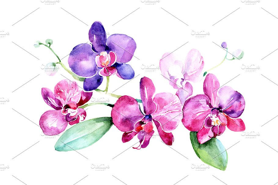 Branch of purple orchids PNG set.
