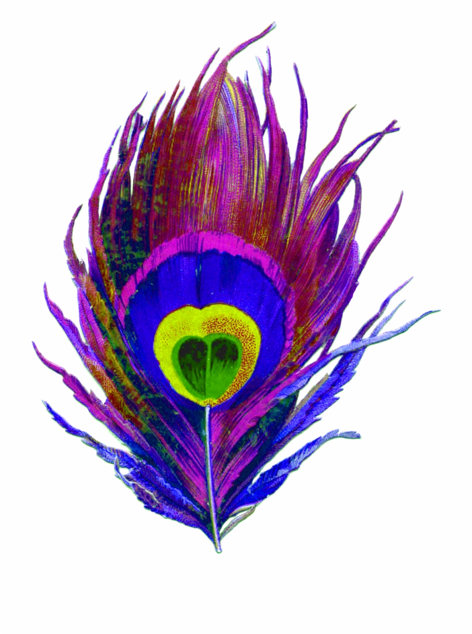 Purple, Peacock, Bird, Feather, Colorful, Eye, Designs.