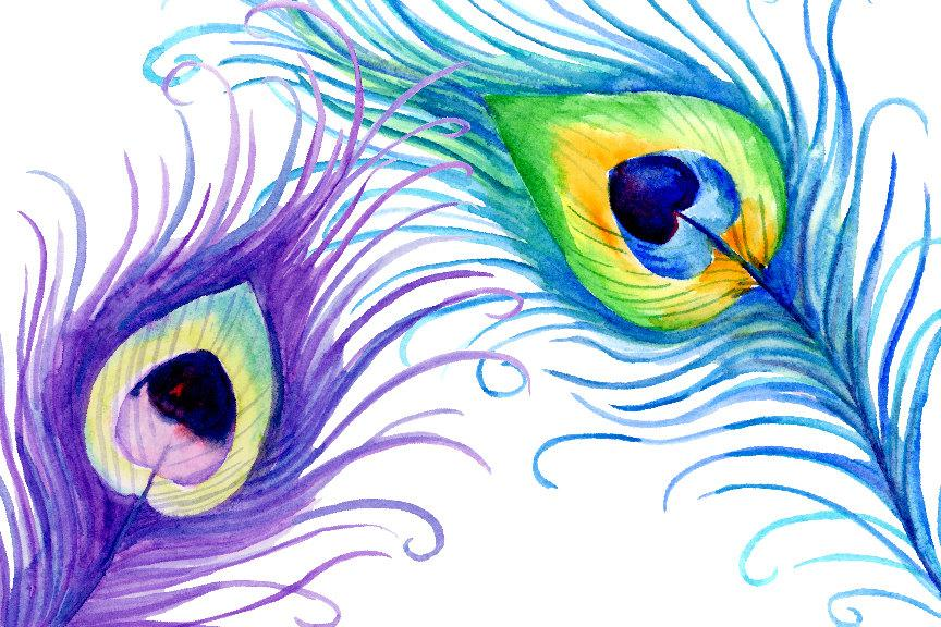 Watercolor clipart peacock feathers for instant download.