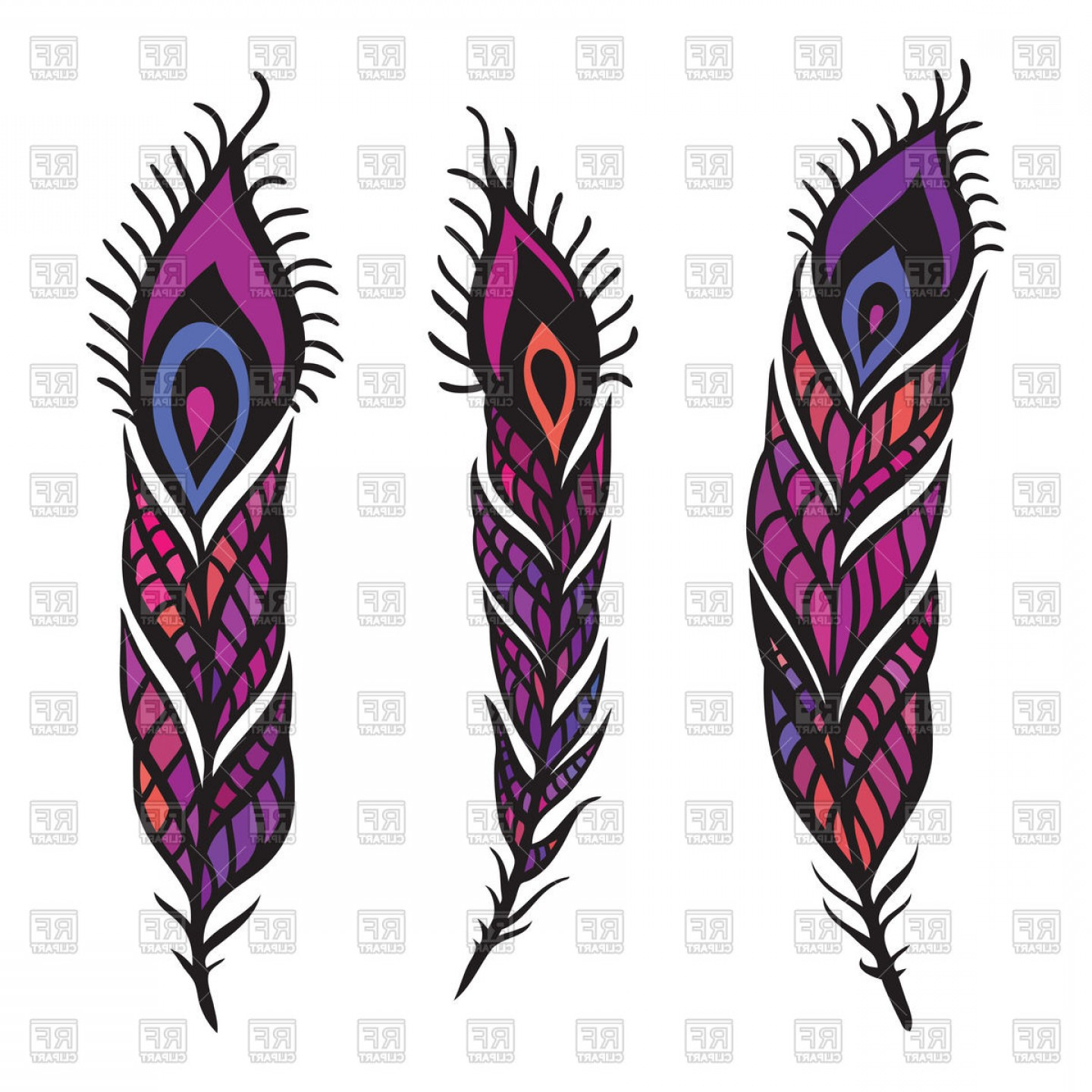 Pink And Purple Peacock Feathers Vector Clipart.
