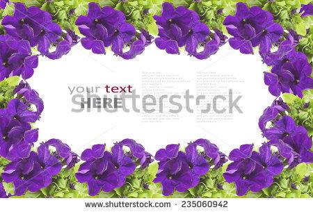 Free Purple Petunias, Close view Photos.