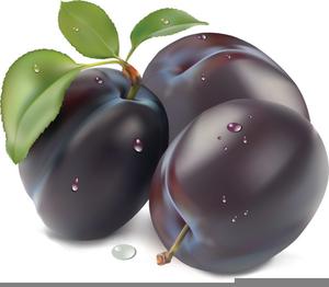 Purple Plum Clipart.