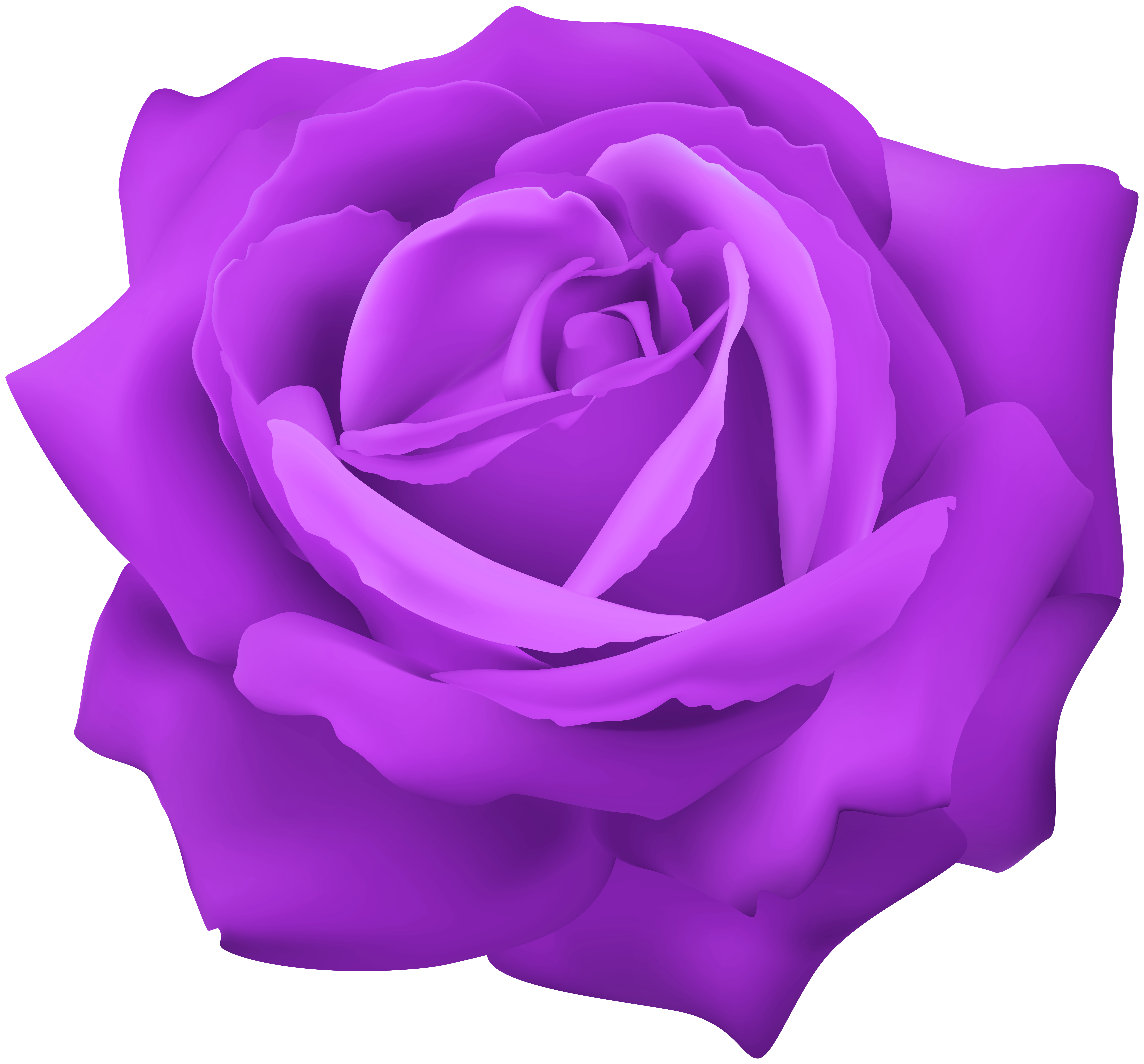 Purple Rose Flower Clip Art Image.