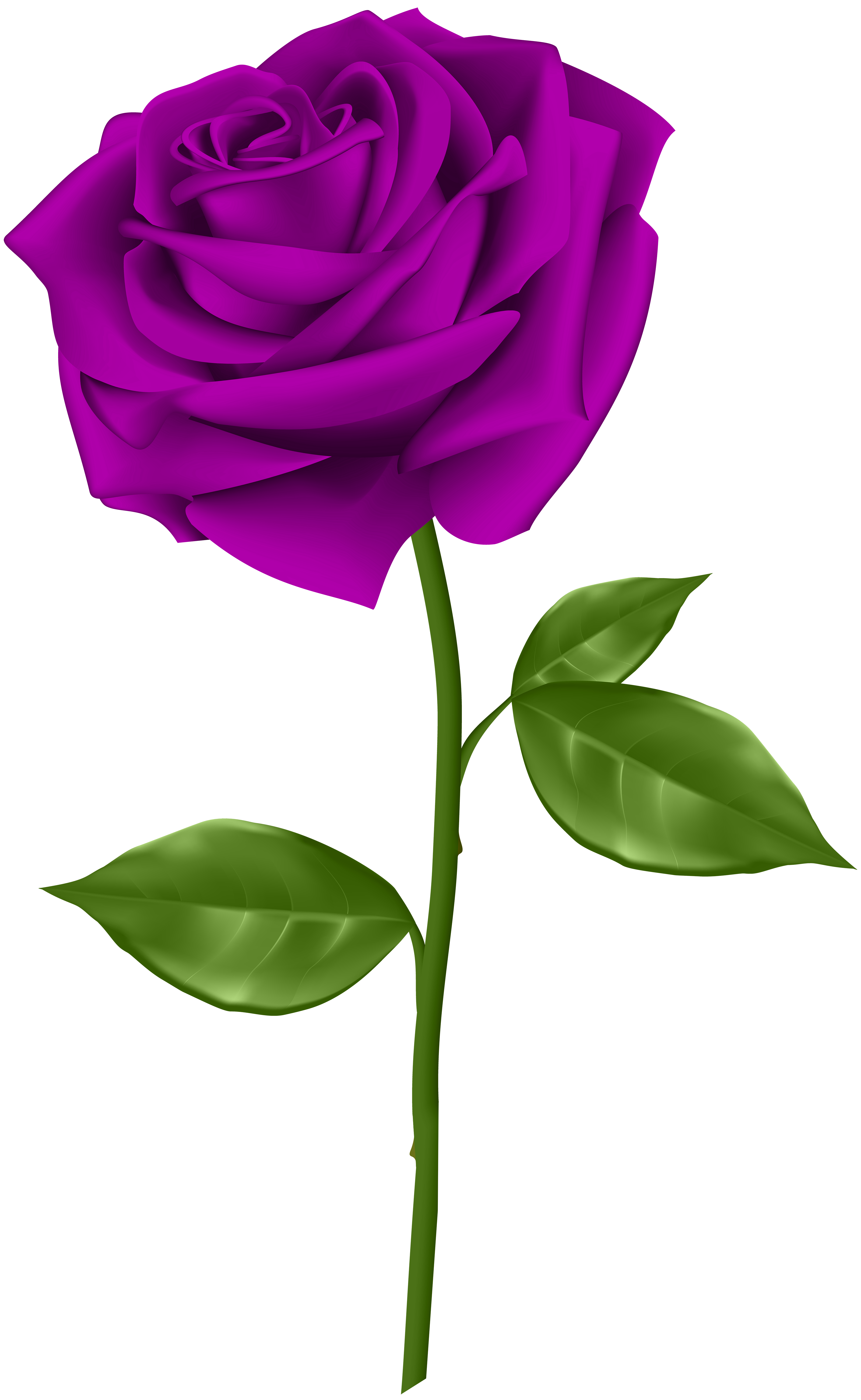 Purple Rose Transparent PNG Clip Art.