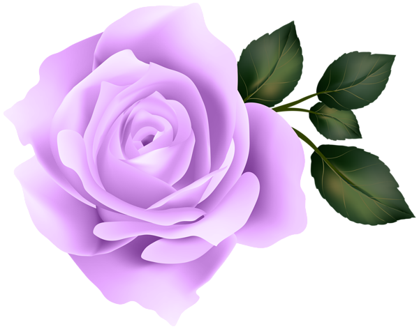 Purple rose clip art clipart images gallery for free.