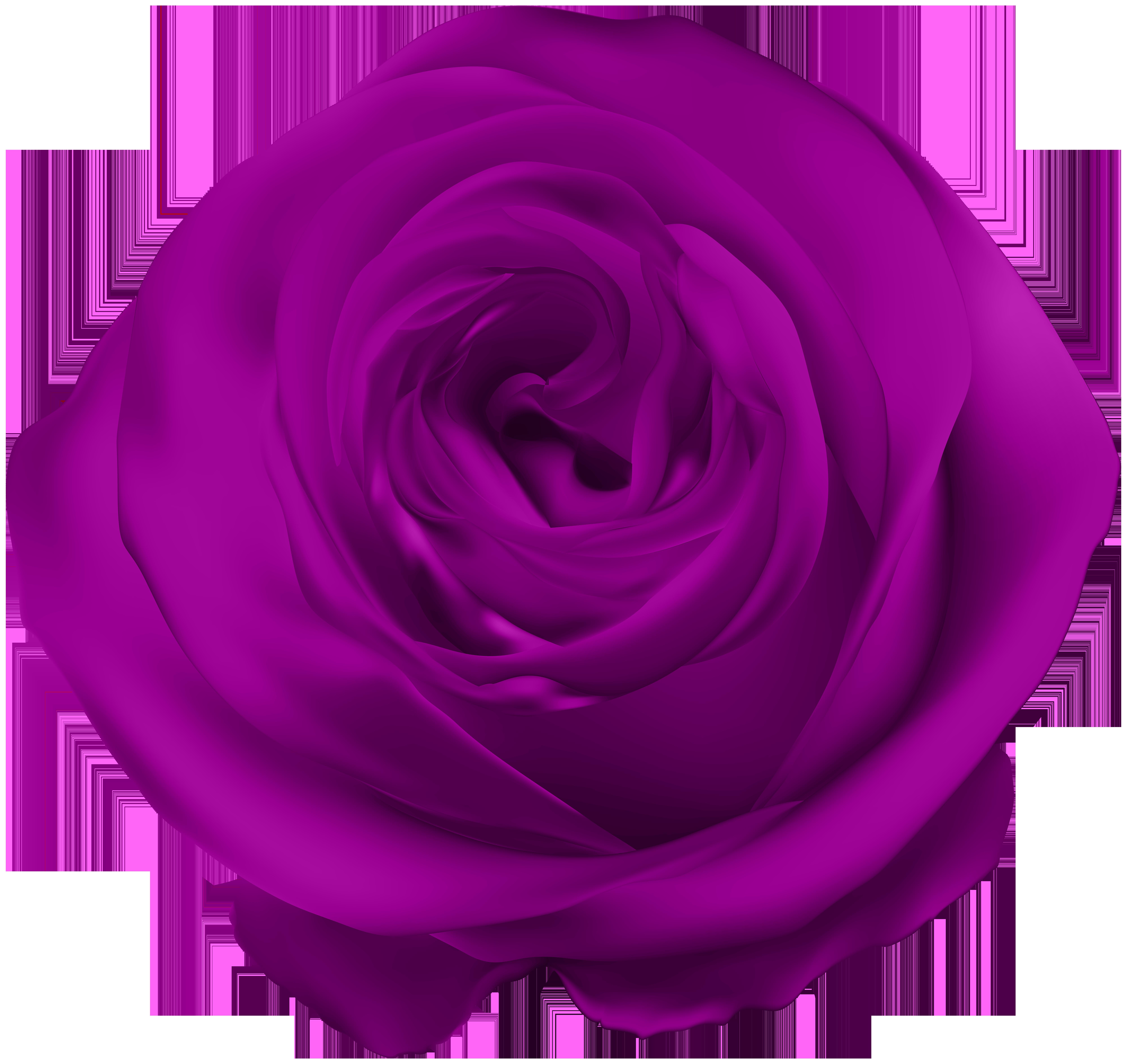 Purple Rose PNG Clip Art.