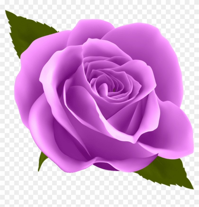 Free Png Download Purple Rose Png Images Background.