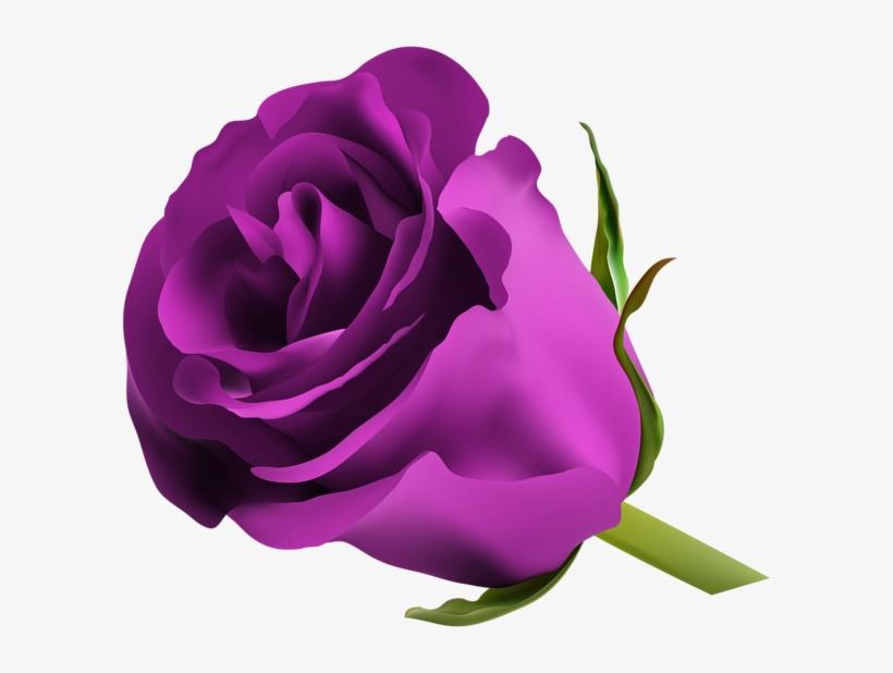 Pink Rose Png, Purple Roses, Make Pictures, Favorite.