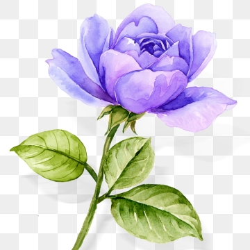 Purple Roses PNG Images.