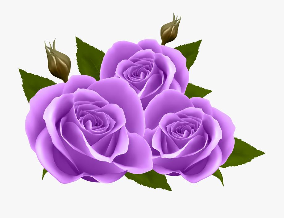 Purple Rose Clipart Transparent Background.
