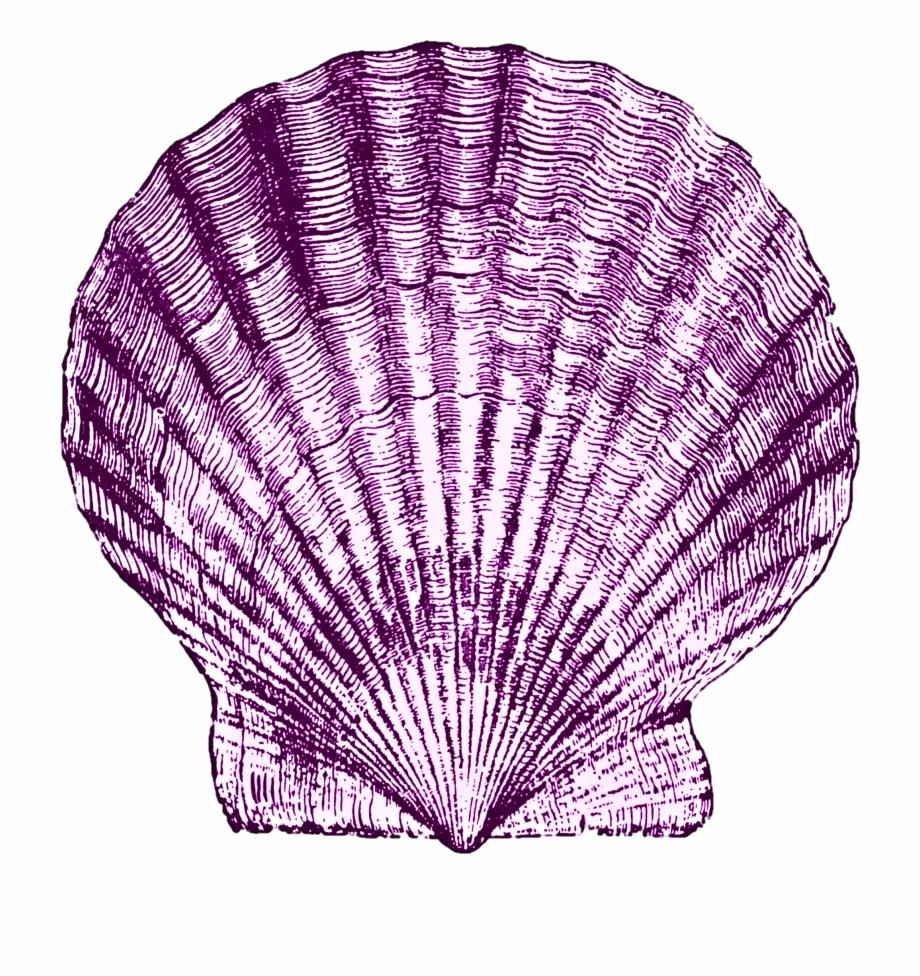 Shell Art, Sea Shells, Nautical, Clip Art, Navy Marine, Free.