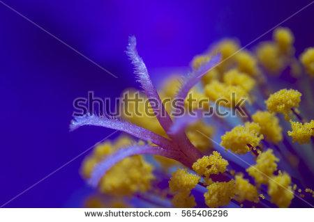 Pollen Grains Stock Photos, Royalty.