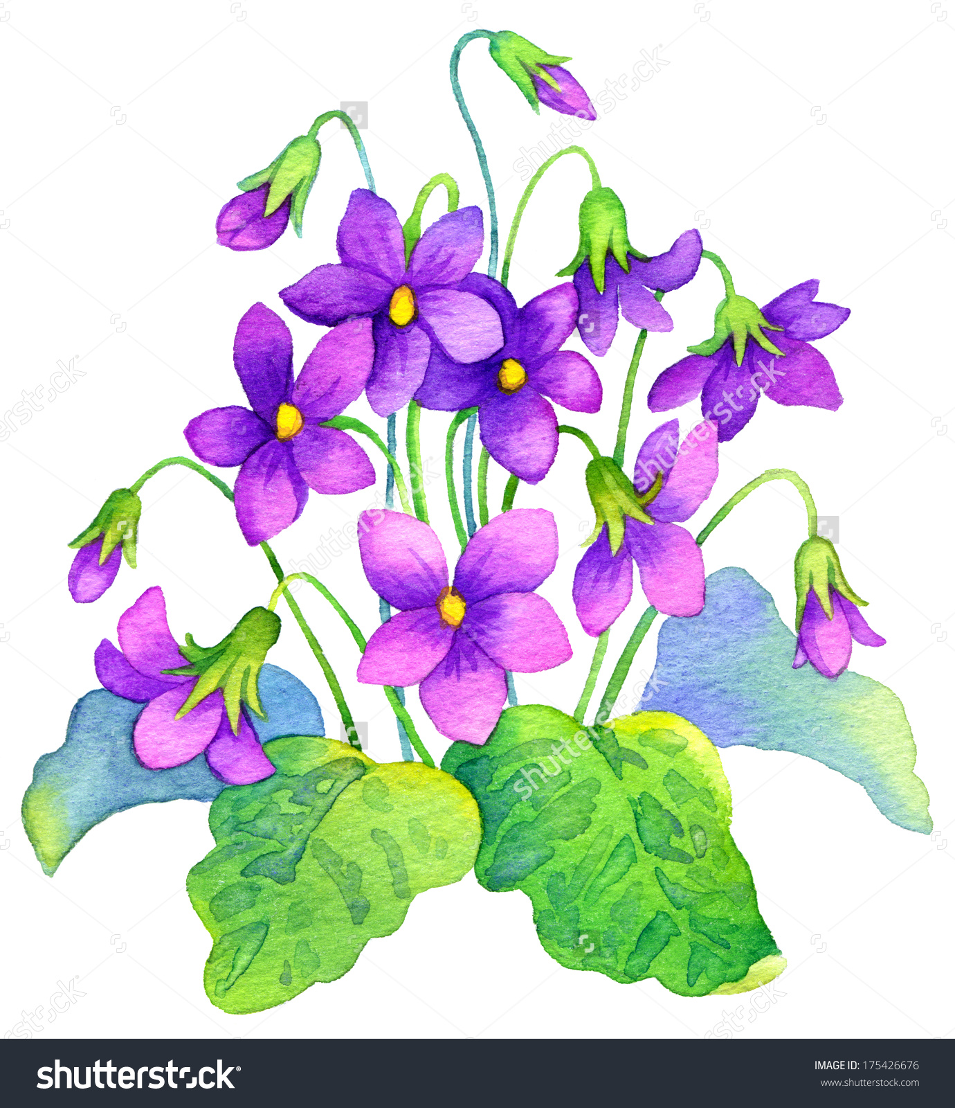 Watercolor Painting Bright Purple Flowers Lush Stock Illustration.