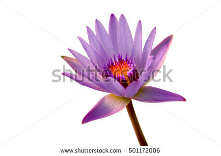 "purple Stamens"" Stock Photos, Royalty."