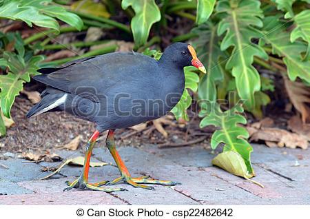 Stock Photo of Australian birds.