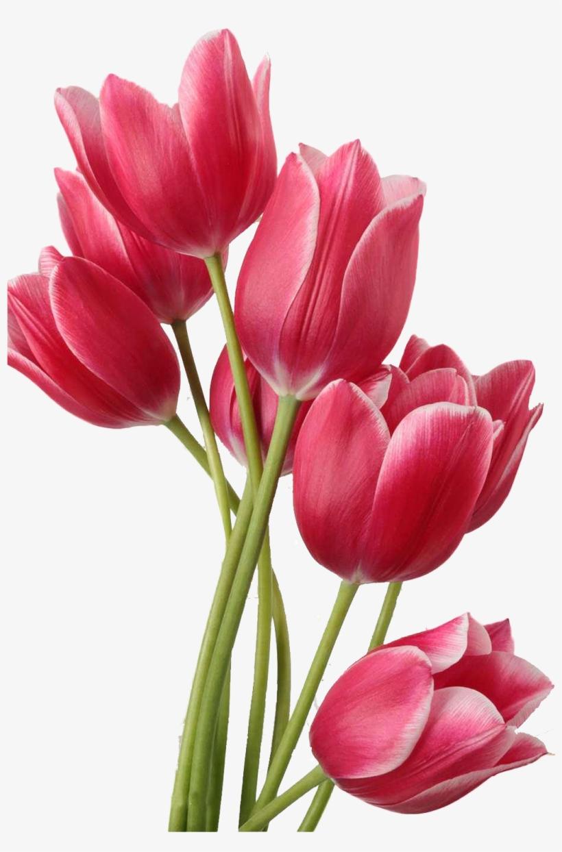 Flower Tulips In A Vase Clip Art.