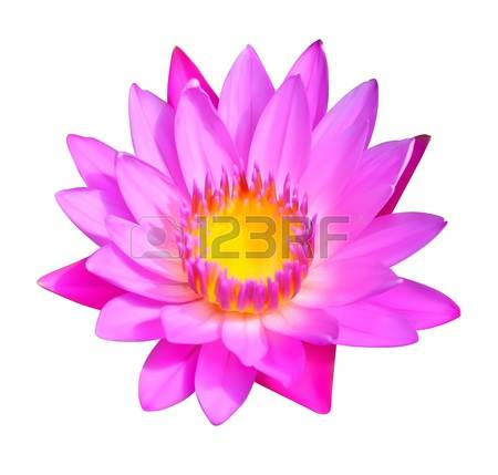 881 Aquatic Lilies Stock Vector Illustration And Royalty Free.