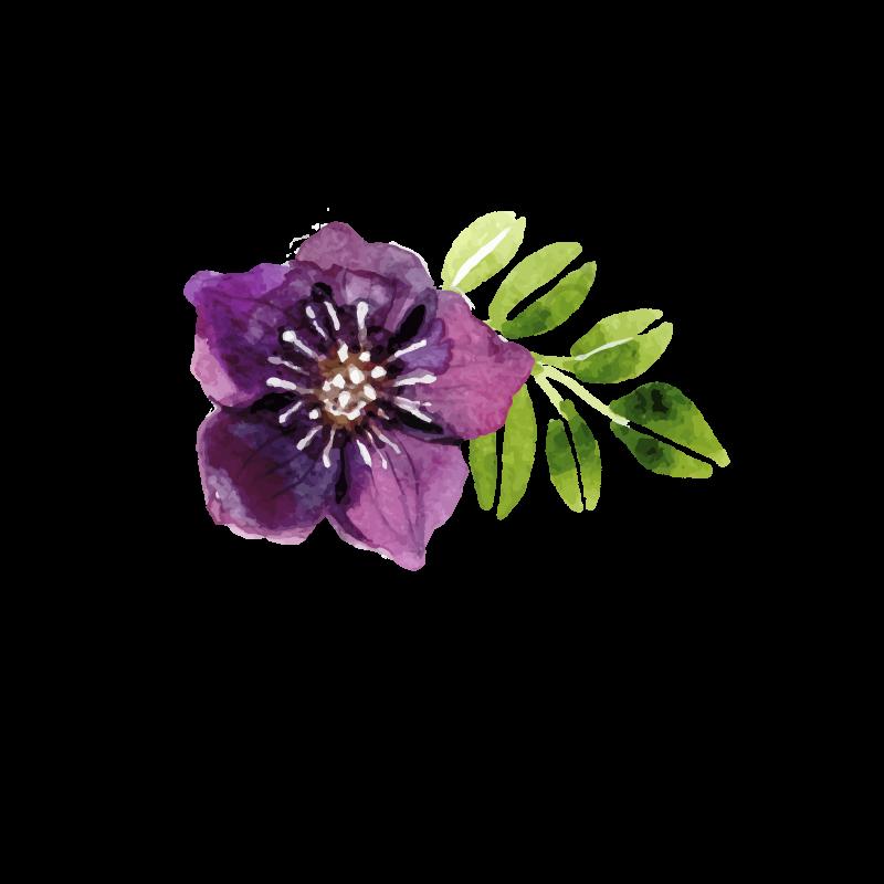 Purple Watercolor Flowers, Watercolor Flower, Purple Flower.