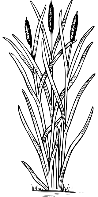 Free vector graphic: Reed, Weed, Nature, Plant, Biology.