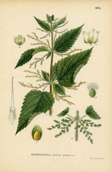 1000+ images about Herbal Botanical Prints on Pinterest.