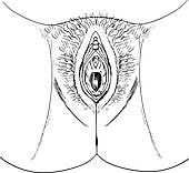Vagina Clip Art.