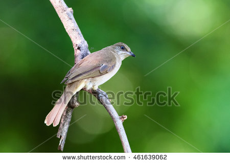 Bulbul Garden Stock Photos, Royalty.