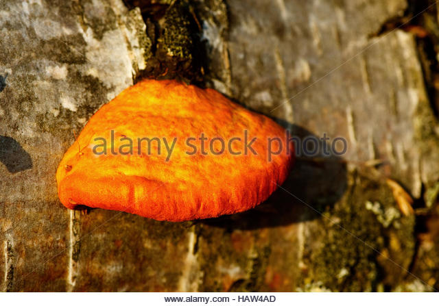 Porling Stock Photos & Porling Stock Images.