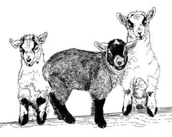 Pygmy Goat Clipart.