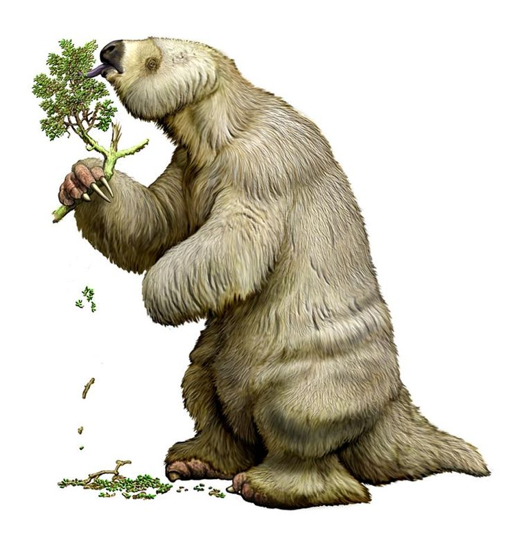 1000+ ideas about Ground Sloth on Pinterest.