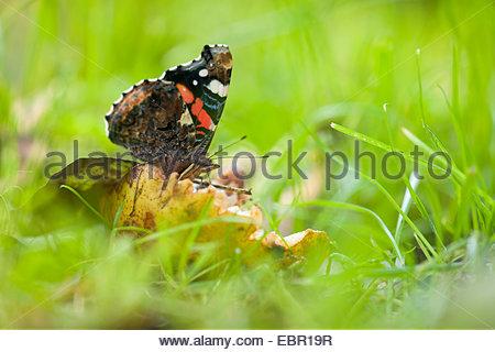 Butterfly Wing Pattern Stock Photos & Butterfly Wing Pattern Stock.