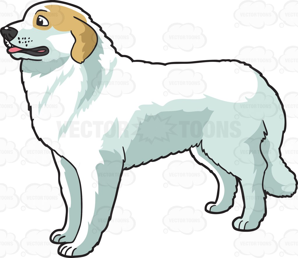 A Kind Looking Great Pyrenees Dog Cartoon Clipart.