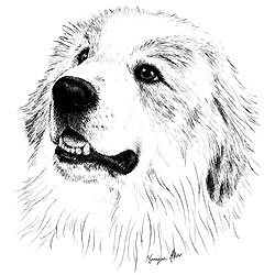 Great pyrenees dog clipart.